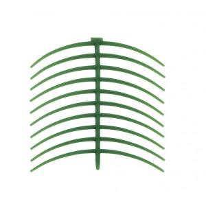 Ceara scheletata (annular clasp bent)